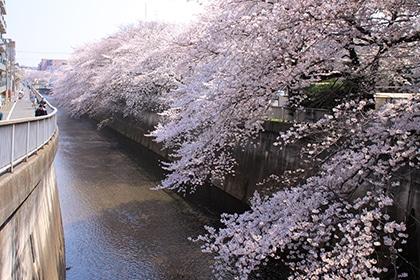 石神井川(約1200m・徒歩15分)